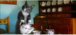 Как заваривать разные сорта чая: зелёный чай, красный чай, белый чай, улун чай, пуэр чай